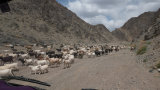 Driving Past Goat Herd, South Gobi
