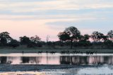 Red Lechwe at Sunset