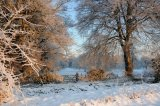 Sparham Beeches In The Snow