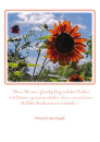08 Sonnenblume