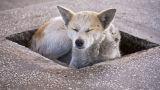 04. Hund an einer Tankstelle bei Lugoj