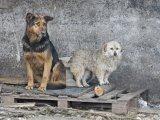 8. Tierheim Hunde