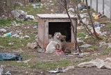 auf einer Müllkoippe in Bukarest.