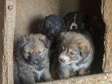 in einem Tierheim in der Nähe von Bukarest