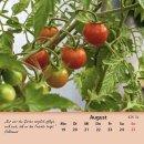 Tomaten/tomatoes