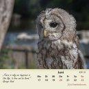 Waldkauz/tawny owl