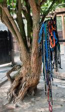 08. Leinen-Baum