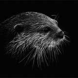 Asian Short Clawed Otter I