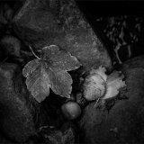 NE012-Leaves V