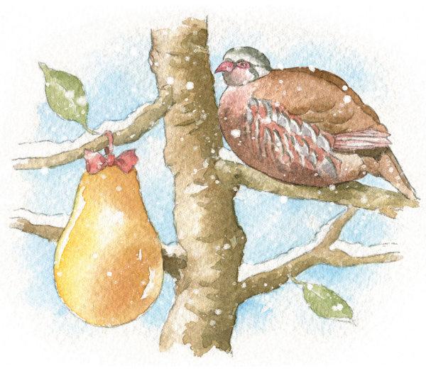 sallybarton_watercolour_Christmasimages_PartridgeinaPearTree