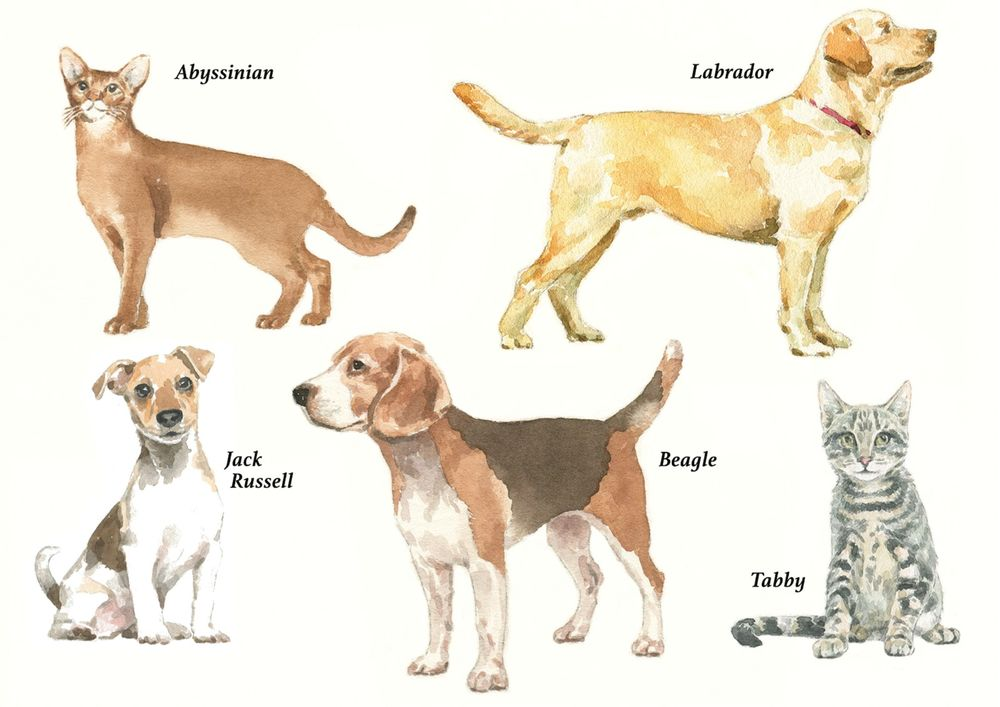 Dogs_Cats_watercolour illustration_sally barton
