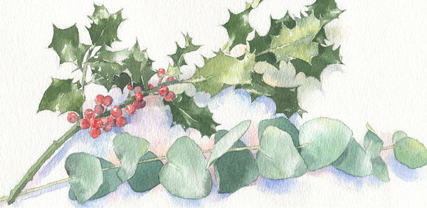 SallyBarton_ChristmasCardIllustration_Holly_Eucalyptus