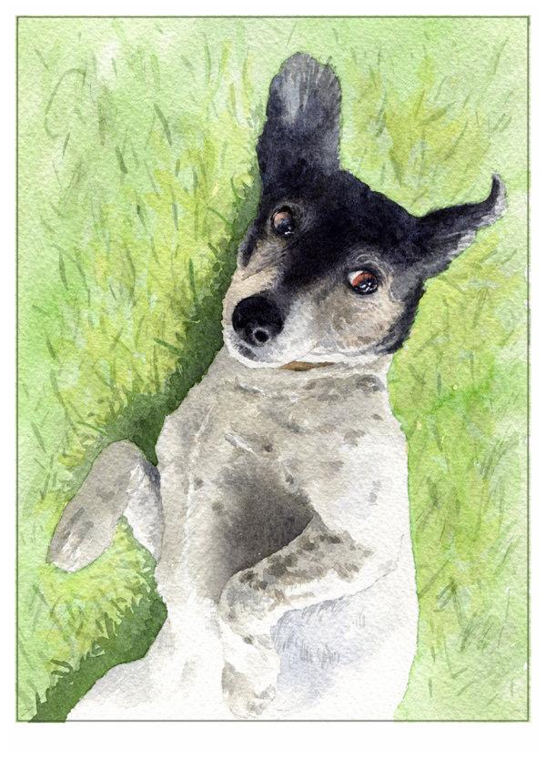 petportrait_sallybarton_jackrussell_watercolour