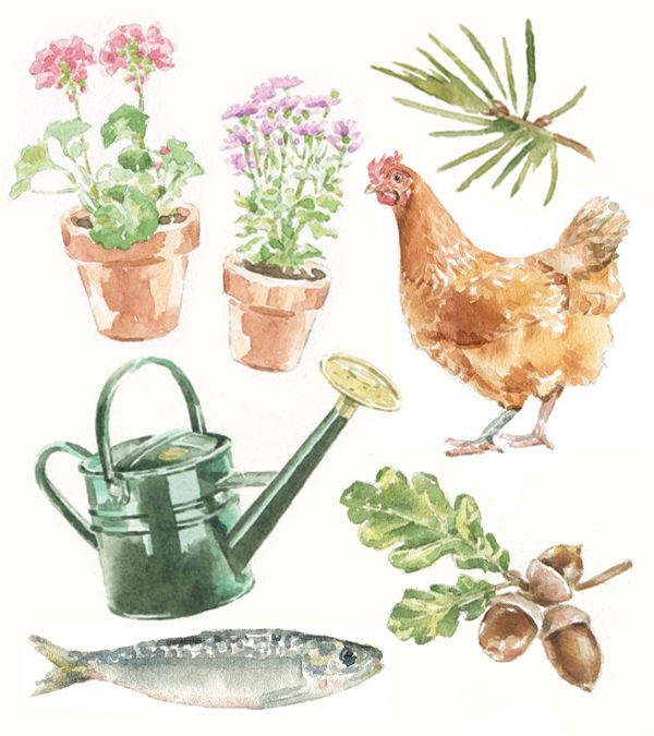 sallybarton_watercolourillustrations_Waitrose