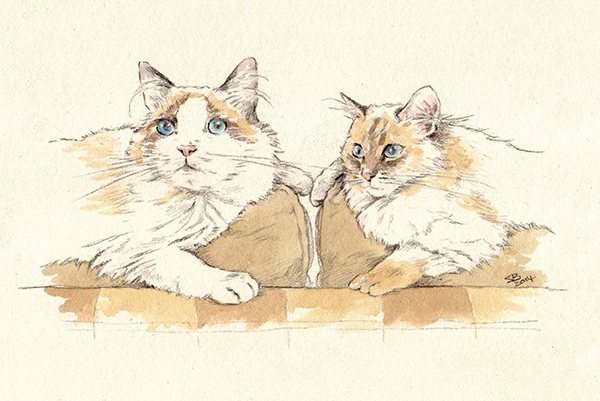 pet portrait_sally barton_cats_watercolourportrait