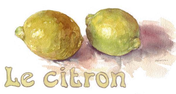 watercolour illustration_sally barton_lemon