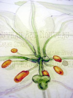 White Lily sketch