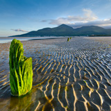 MURLOUGH & THE MOURNES