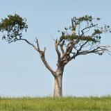 THE RIHANNA TREE