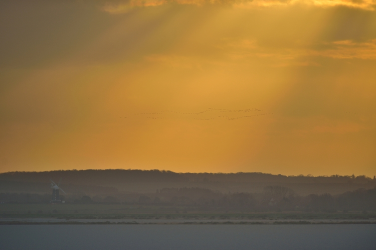 Dawn flight of Pink-footed Geese from Scolt Head