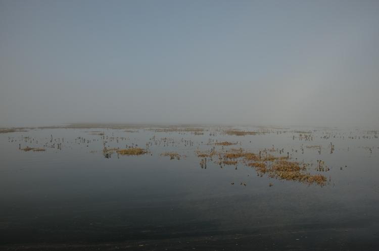 Fog Bow Saltmarsh