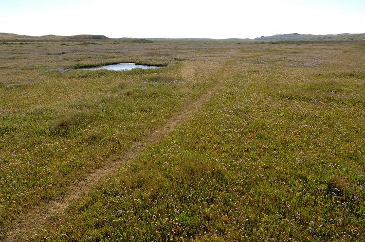 Saltmarsh path East end of Hut Marsh