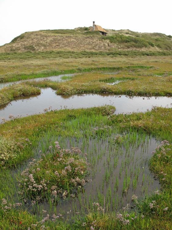 Saltmarsh pans and vegetation