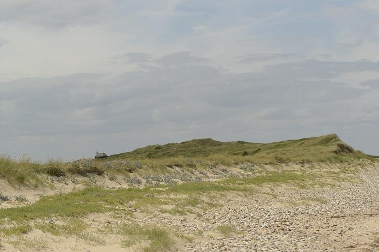 Dune Flora Scolt Head