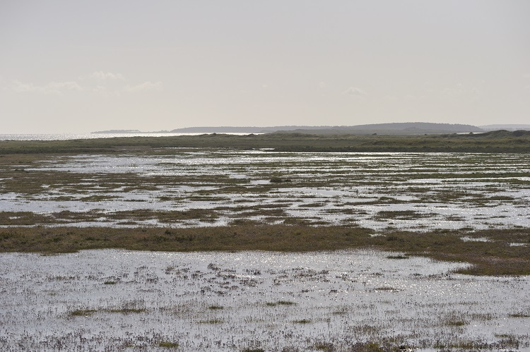 Scolt Hut Marsh at High tide looking west towards Holkham