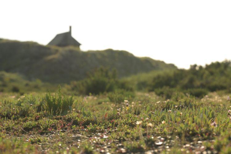 Rare Norfolk Saltmarsh Habitat SM13