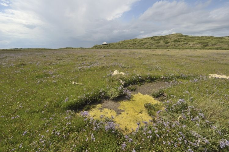 Hut marsh dry Salt-pans and the Hut