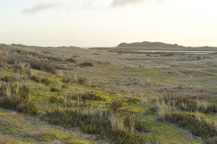 Moss and Fern covered Dunes on Bight Hills