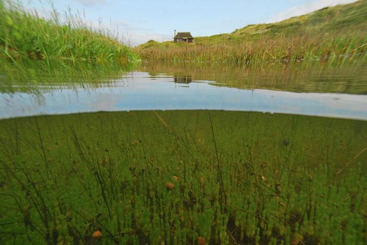 Salt-pan vegetation and the Hut