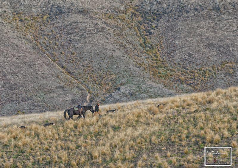 Hugh & Horse 1
