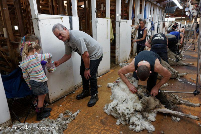 October Shearing workshop 2016-13