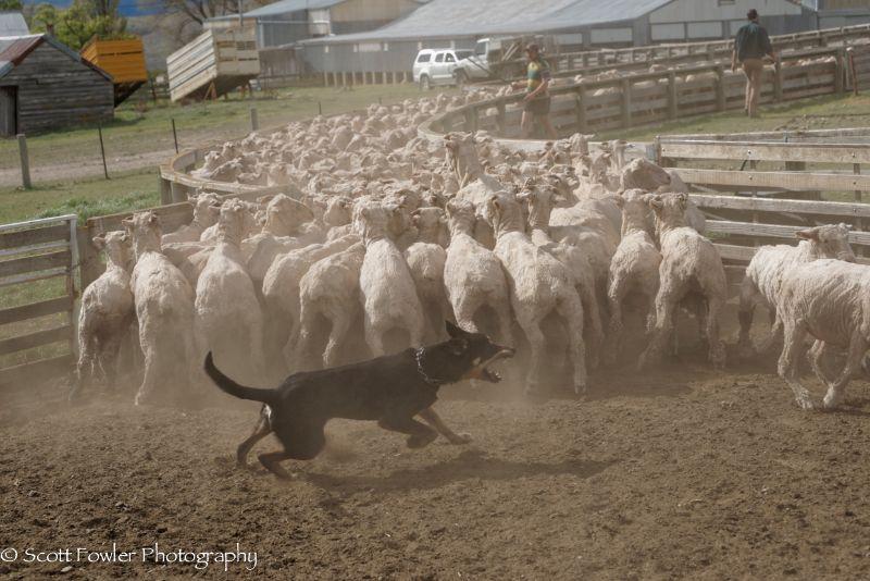 October Shearing workshop 2016-26