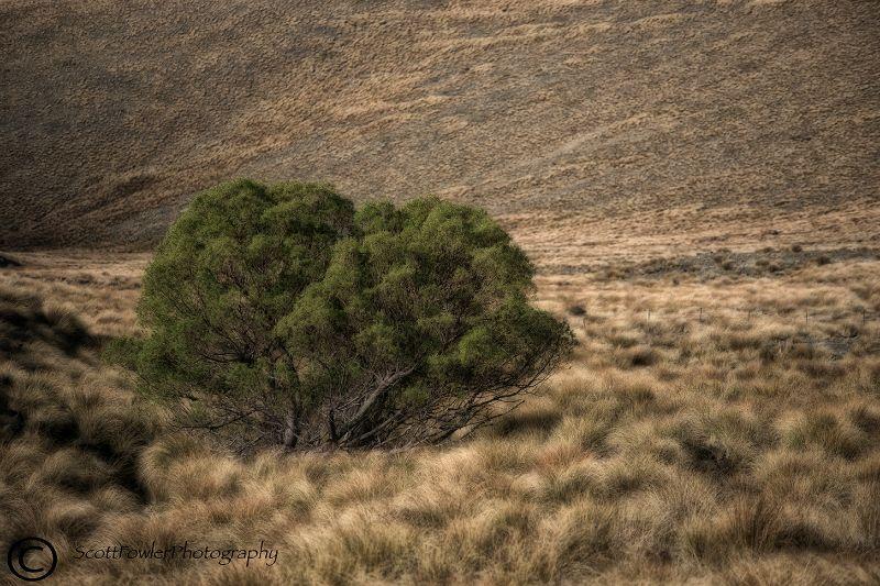 Tree below hut
