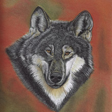 Portrait of a Wolf Print