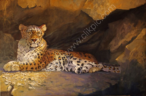 Top Cat - Amur Leopard