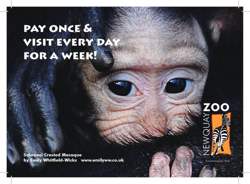 Newquay Zoo promo postcard