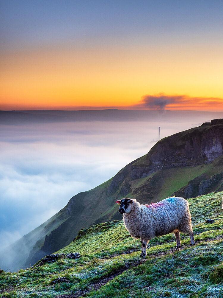 Sheep on Winnats Pass