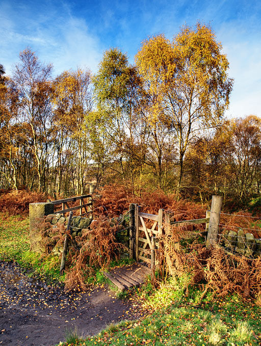 Froggatt wood in autumn