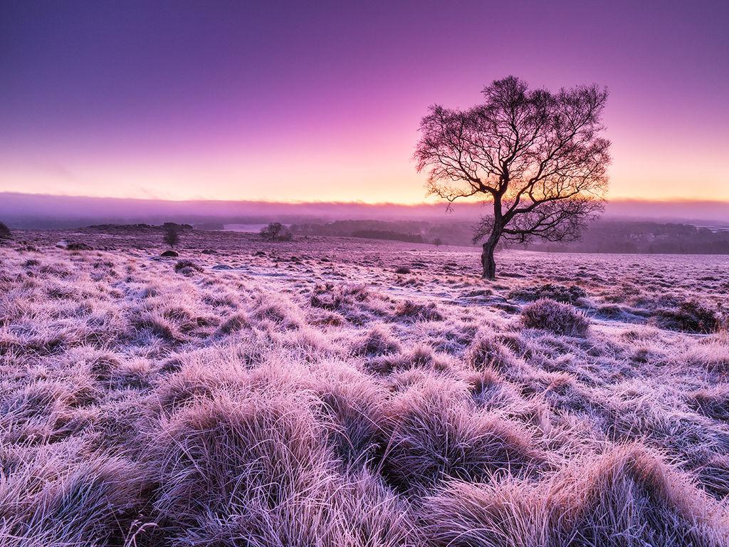 Frosty sunrise on Lawrence Field