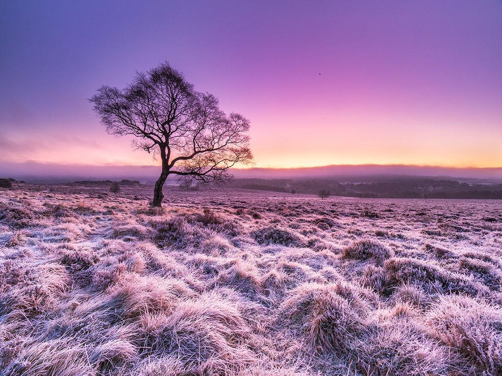 Frost on Lawrence field