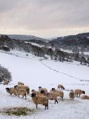 Frozen Lamb