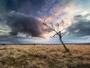 Big Moor tree