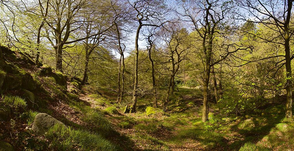 Springtime in Padley Woods