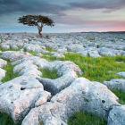 Limestone Rings
