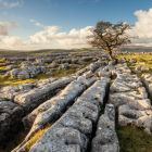 Limestone Farrows