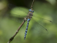 Migrant-Hawker-male